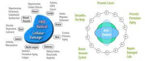 Free-Radicals-and-Antioxidants